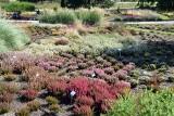 Ogród Botaniczny w Kielcach zachwyca pod koniec lata! [ZOBACZCIE ZDJĘCIA]
