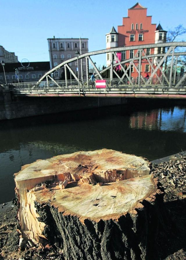 Najwięcej drzew w naszym mieście wycięto w ubiegłym roku w związku z modernizacją wrocławskiego węzła wodnego