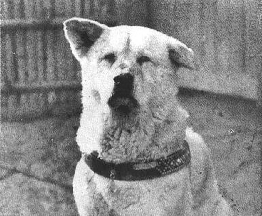 Wierny pies Hachikō...