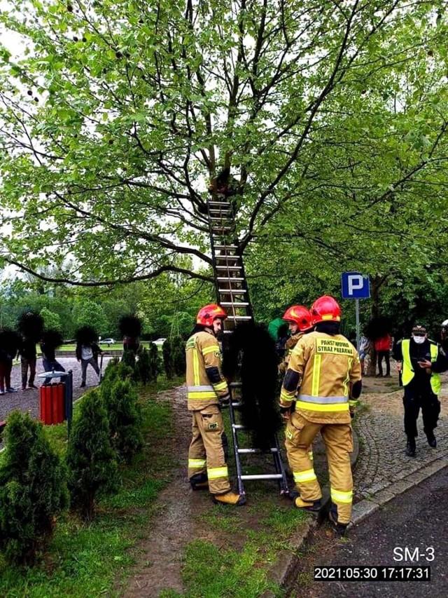 Do zdarzenia doszło przy ul. Szymanowskiego w rejonie skate parku