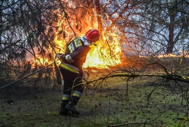 Od początku roku w województwie opolskim strażacy odnotowali prawie 300 pożarów lasów i traw.