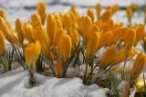 Uwaga, załamanie pogody. Będą przymrozki. IMGW prognozuje intensywne opady deszczu i śniegu