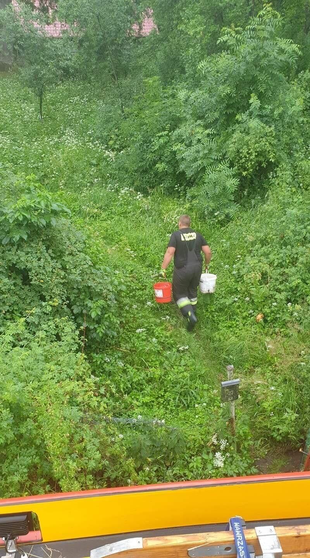Strażacy napoili spragnione zwierzęta. OSP Potęgowo w...