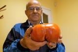 Taaaki pomidor urósł na działce pana Czesława Bułakowskiego z Inowrocławia