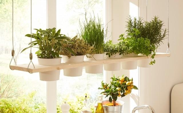 Półka na zioła to piękna i pachnąca dekoracja kuchni. Dzięki niej zawsze będziemy mieli świeże zioła z zasięgu ręki, a nasze potrawy nabiorą bogatszego smaku.