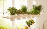 Dekoracyjna i praktyczna wisząca półka na zioła - zrób to sam