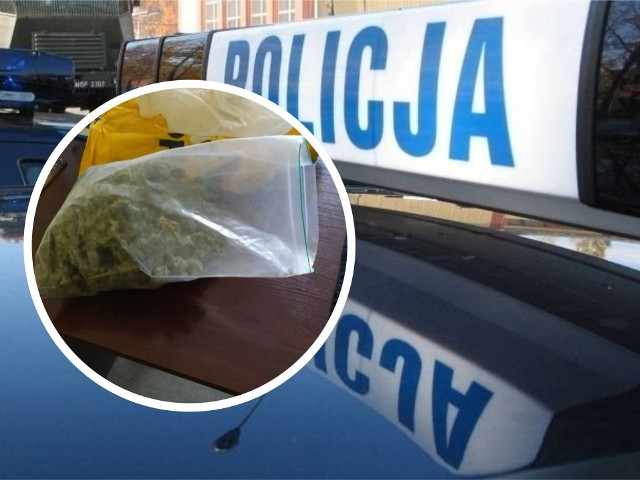Młody grudziądzanin wpadł z marihuaną -  ponad 450 gramów -  podczas kontroli drogowej na ulicy Toruńskiej. Poruszał się fordem transitem. Został tymczasowo aresztowany na trzy miesiące.