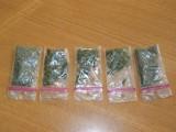 Bialogardzka policja zatrzymała włamywaczy i pasera z marihuaną