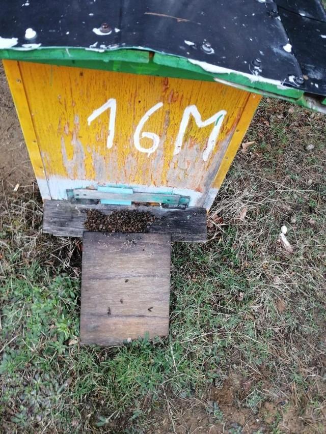 Ule zalane ropą na pasiece z Zajezierza. Pszczoły zostały zatrute. Ruszyła pomoc dla pszczelarza