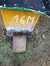 Ktoś zalał ropą ule i wytruł pszczoły na pasiece w gm. Chmielno. Błyskawiczna pomoc dla pszczelarza - w dobę zebrano pieniądze!