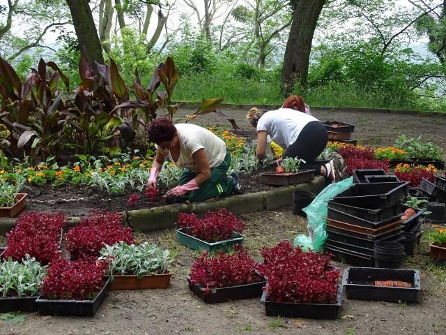 Ruch Społeczny Chełmno - Miasto Mieszkańców zapowiedział, że w tym roku też posadzi kwiaty na Starych Plantach.Jak obiecali, tak zrobili - zakasali rękawy i zrobili nasadzenia na klombie. Pomogli pracownicy zieleni miejskiej Urzędu Miasta Chełmna. Efekt podziwiać można na Plantach.