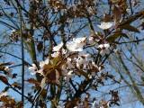 Wiosna w Pabianicach. Zazieleniło się w mieście i w parkach ZDJĘCIA