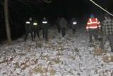 Łosie pojawiły się w Tczewie. Trwają poszukiwania klempy z młodym