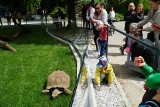 Do Żółwiego Domu w Starym Zoo wprowadziły się zwierzęta. Poznaniacy budują swoje zoo