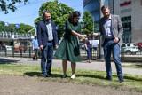 Nowa łąka kwietna obok przystanku tramwajowego w Gdańsku Wrzeszczu w pobliżu Galerii Bałtyckiej