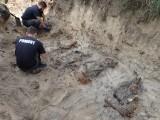 Nietypowe znalezisko w Szczańcu! Grupa POMOST odkryła masowy grób niemieckich żołnierzy poległych w 1945 roku