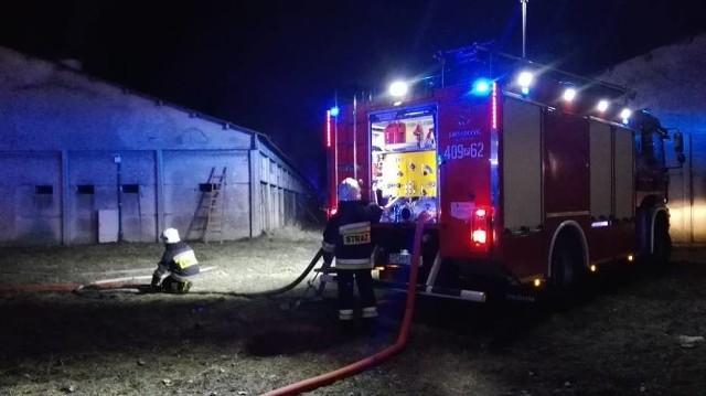 Kilka tysięcy indyków spłonęło w pożarze, który wybuchł w piątek po godzinie 21 na terenie fermy drobiu w Szamocinie w powiecie chodzieskim.Przejdź do kolejnego zdjęcia --->