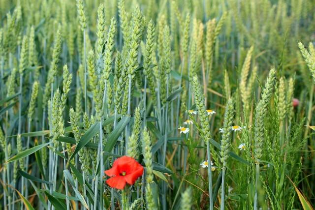 Zmiany w branży rolnej
