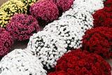 Władze Suwałk wesprą przedsiębiorców, którzy sprzedają kwiaty i znicze w rejonie cmentarza