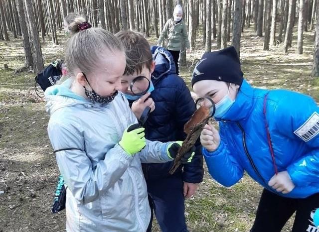 Uczniowie, podczas lekcji w lesie poznawali tajniki przyrody.