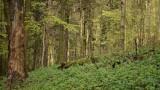 Nowy rezerwat przyrody na Podkarpaciu: Przysłup na terenie gmin Lesko i Sanok