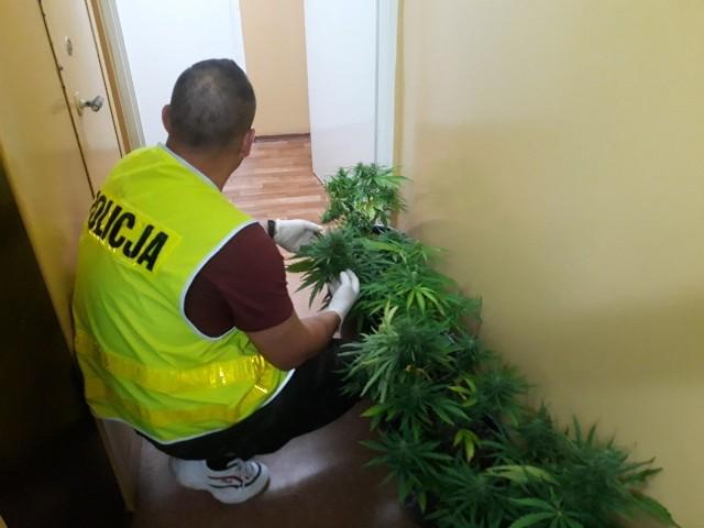 Młodszy z braci usłyszał zarzut kradzieży mienia, za co grozi mu do pięciu lat więzienia. Natomiast 30-latek odpowie za posiadanie marihuany oraz prowadzenie nielegalnej uprawy
