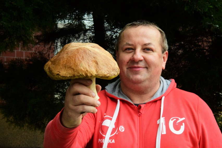 Romuald Szymański prezentuje borowika, którego znalazł dziś w lesie pod Osiekiem Wielkim