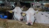 Ceny skupu wołowiny wracają do normy [stawki z przełomu lutego i marca 2019]