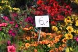 Ryneczek w Gorzowie. Ceny warzyw, owoców oraz kwiatów na ryneczku Jerzego