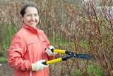 Przycinanie drzew owocowych: jak i kiedy to robić. Poradnik