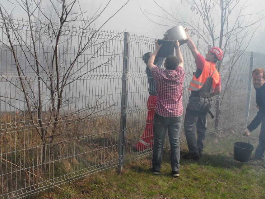 Pożar łąki w Milowicach