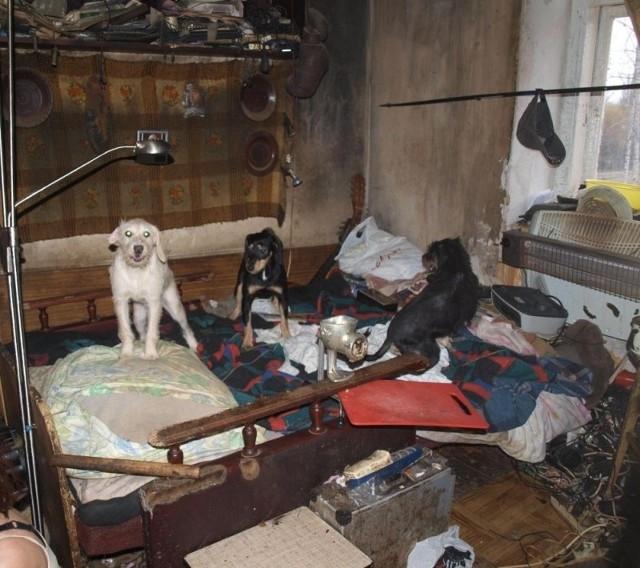 Nie wiadomo nawet dokładnie, ile psów przebywa w mieszkaniu…