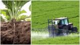 Wycofanie glifosatu. Plantatorzy wyliczają kłopoty, z którymi mogą się borykać po tym ruchu