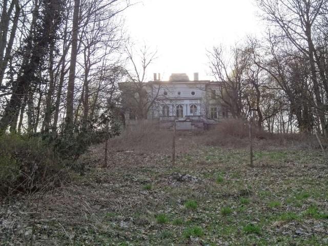 7 mln zł kary za wycięcie drzew wokół pałacu!