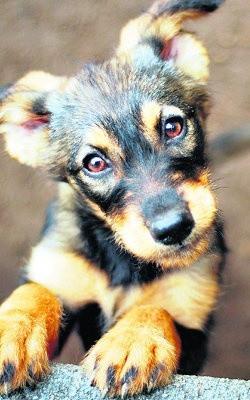 Adopcje zwierzaków, ulica Czarnieckiego 12