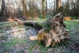 Zakaz wstępu do lasu od 3 do 11 kwietnia. Polecenie premiera