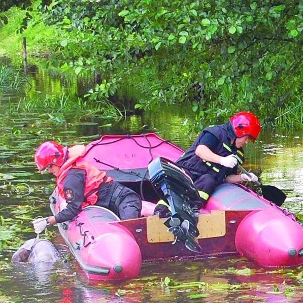 Akcja strażaków była błyskawiczna. Wydobycie zwłok z rzeki Ełk zajęło im tylko kilka minut.