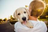 Najpopularniejsze rasy psów w Polsce. To właśnie te rasy psów są uwielbiane przez wszystkich! [TOP 12] 22.09.21
