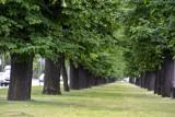 Wielka Aleja Lipowa w Gdańsku przejdzie gruntowną rewitalizację. Zarząd Dróg i Zieleni chce, by odzyskała ona swój dawny, zabytkowy kształt