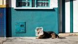 Zwyrodnialec w Paprotni w gminie Sadkowice niedaleko Rawy Mazowieckiej próbował utopić psa w szambie. Mężczyzna znęcał się też nad żoną