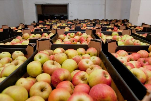 Eksport jabłek do Chin może poprawić sytuację na rynku krajowym. Teraz jabłka są bardzo tanie