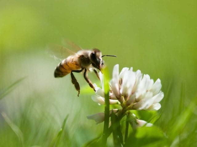 Poznaj różne gatunki pszczół i dowiedz się o nich więcej. Zobacz naszą galerię.