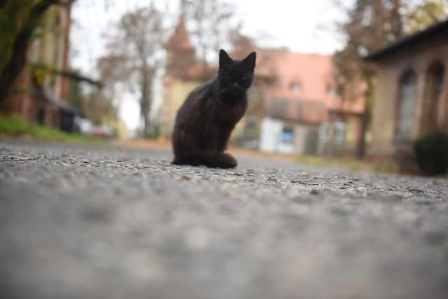 Lubuskie koty - zdjęcie ilustracyjne.