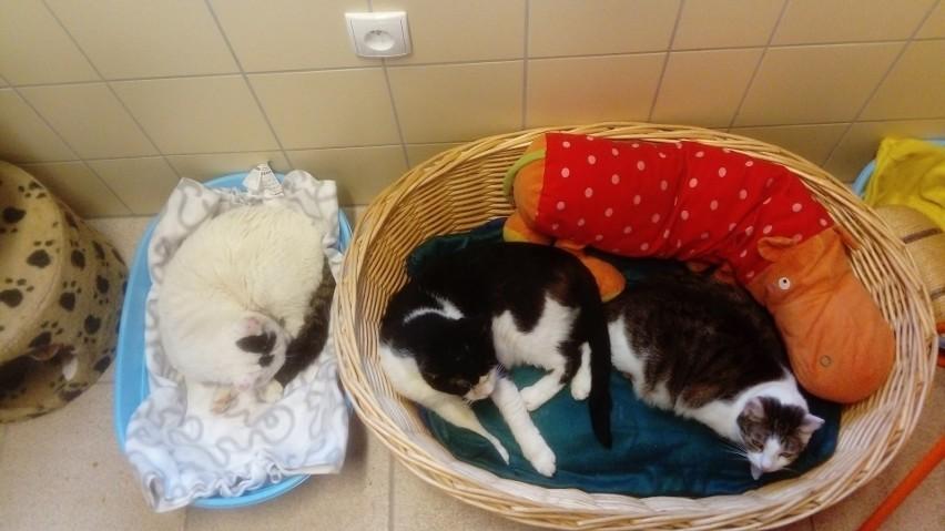 Koty w nowym obiekcie mają lepsze warunki.