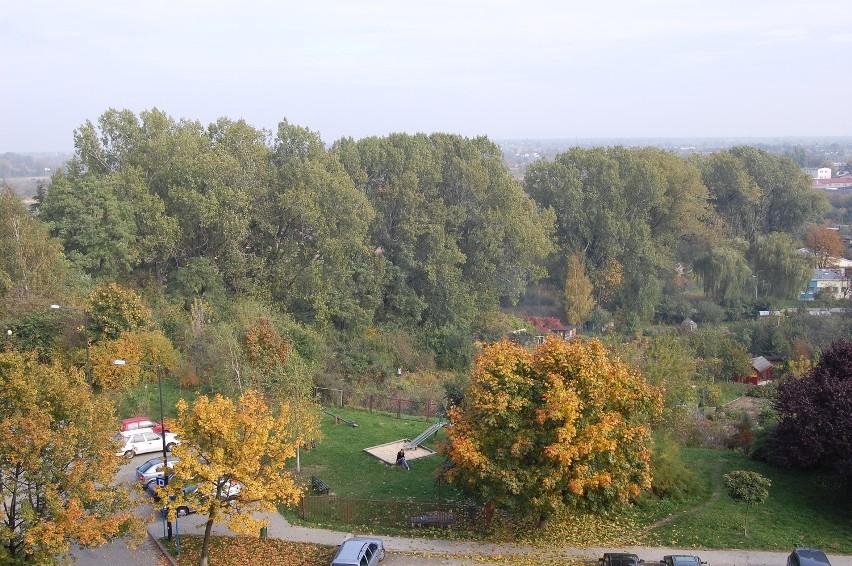 Teren parku przy Zawilcowej przed wycinką. Widok od strony ul. Niepodległości...