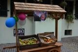 Wrocław: Zjedz jabłko i zostaw Putinowi ogryzek - rozdają owoce przy pl. Solnym (ZDJĘCIA)