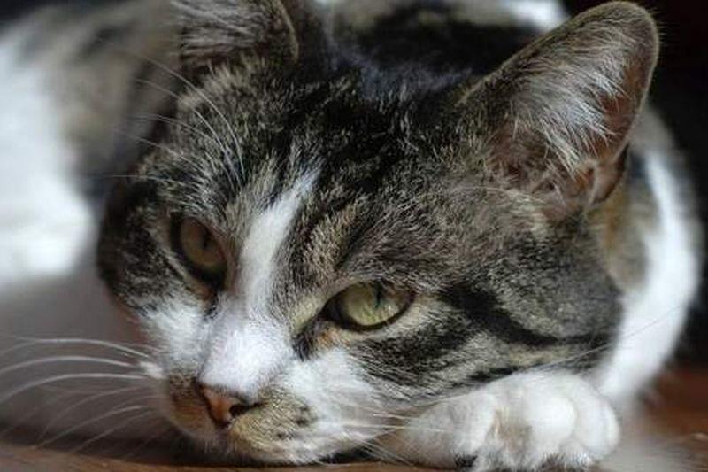 Kot Kaczyńskiego chorował na nerki