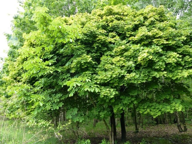 W czwartek 8 kwietnia miało się odbyć specjalne posiedzenie komisji ochrony środowiska Rady Miejskiej Łodzi w sprawie przyszłości Zielonej Ostoi, kilkunastu hektarów terenów zielonych w otulinie Lasu Łagiewnickiego, które ma być przeznaczone pod zabudowę mieszkaniową. Posiedzenie jednak odwołano.CZYTAJ DALEJ >>>...
