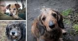 Psi staruszkowie czekają na pomoc! Pomóżmy im przed mrozami