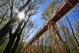 Niezwykła atrakcja w Poznaniu. Ścieżka w koronie drzew jest drugim tego typu obiektem w Polsce [ZDJĘCIA]